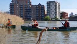 volunteers canoeing into reeds next to blocks of flats