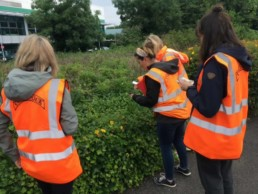Photo of Tideway volunteers on the hunt for invertebrates in hedgerows!