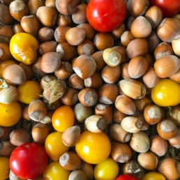 Hazelnuts and tomatoes